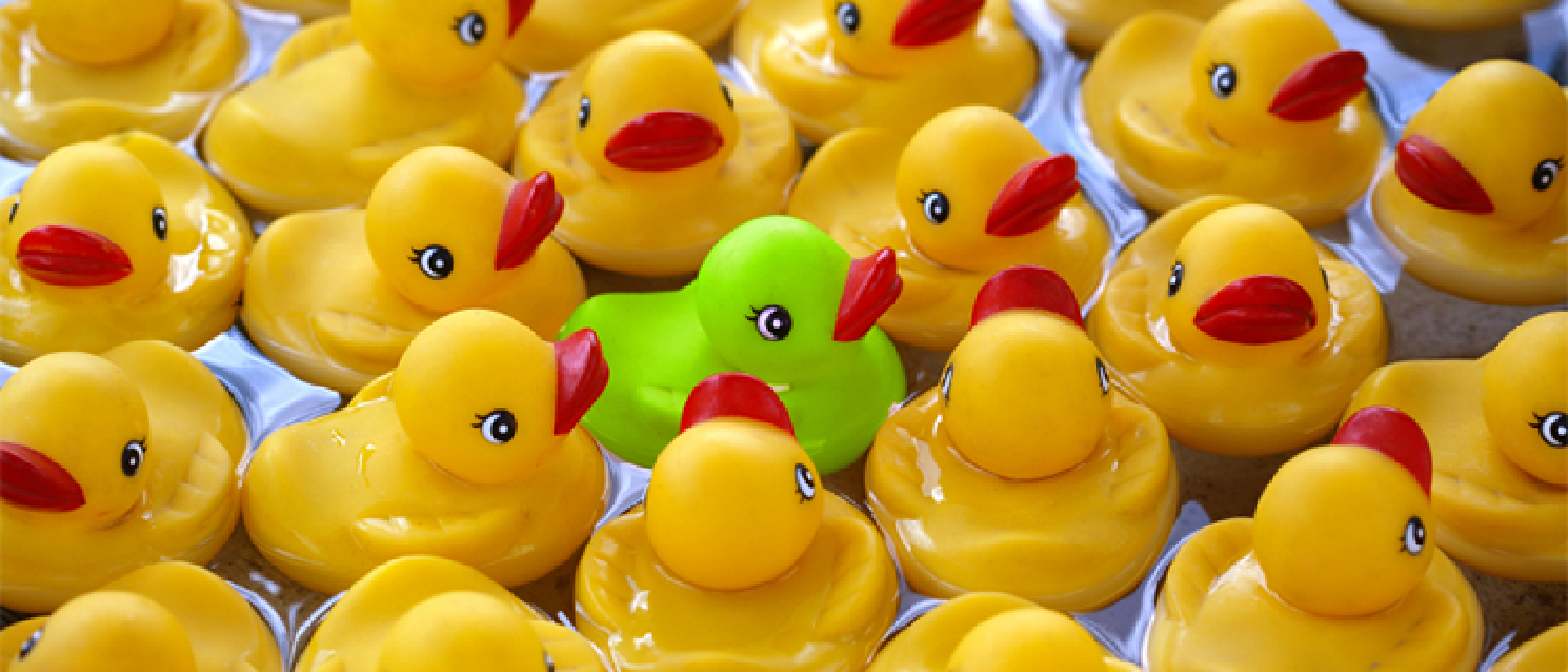 The Green Duck - join the flock for retail business tips and advice!